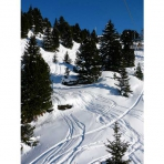 Skiing Through the Trees in the Grand Massif, French Alps